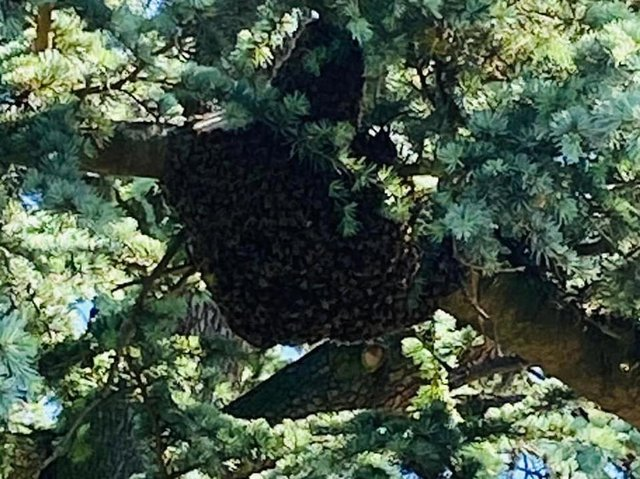 This was one of the colonies of bees on Wednesday morning