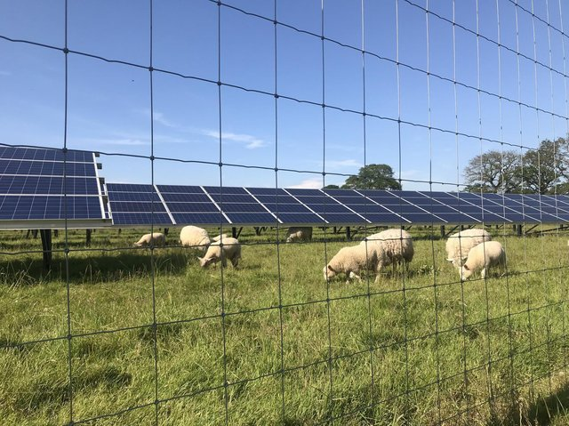 The solar farm is being designed to accommodate the grazing of sheep.  Photo: Jonathan Hutchins