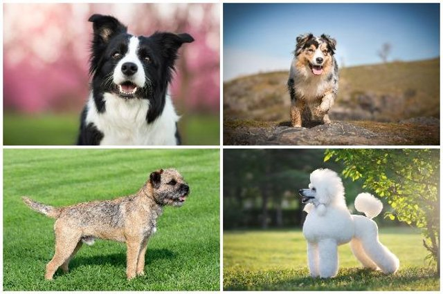 According to Pets at Home, all dogs can be trained, but some breeds are far more receptive than others (Photo: Shutterstock)